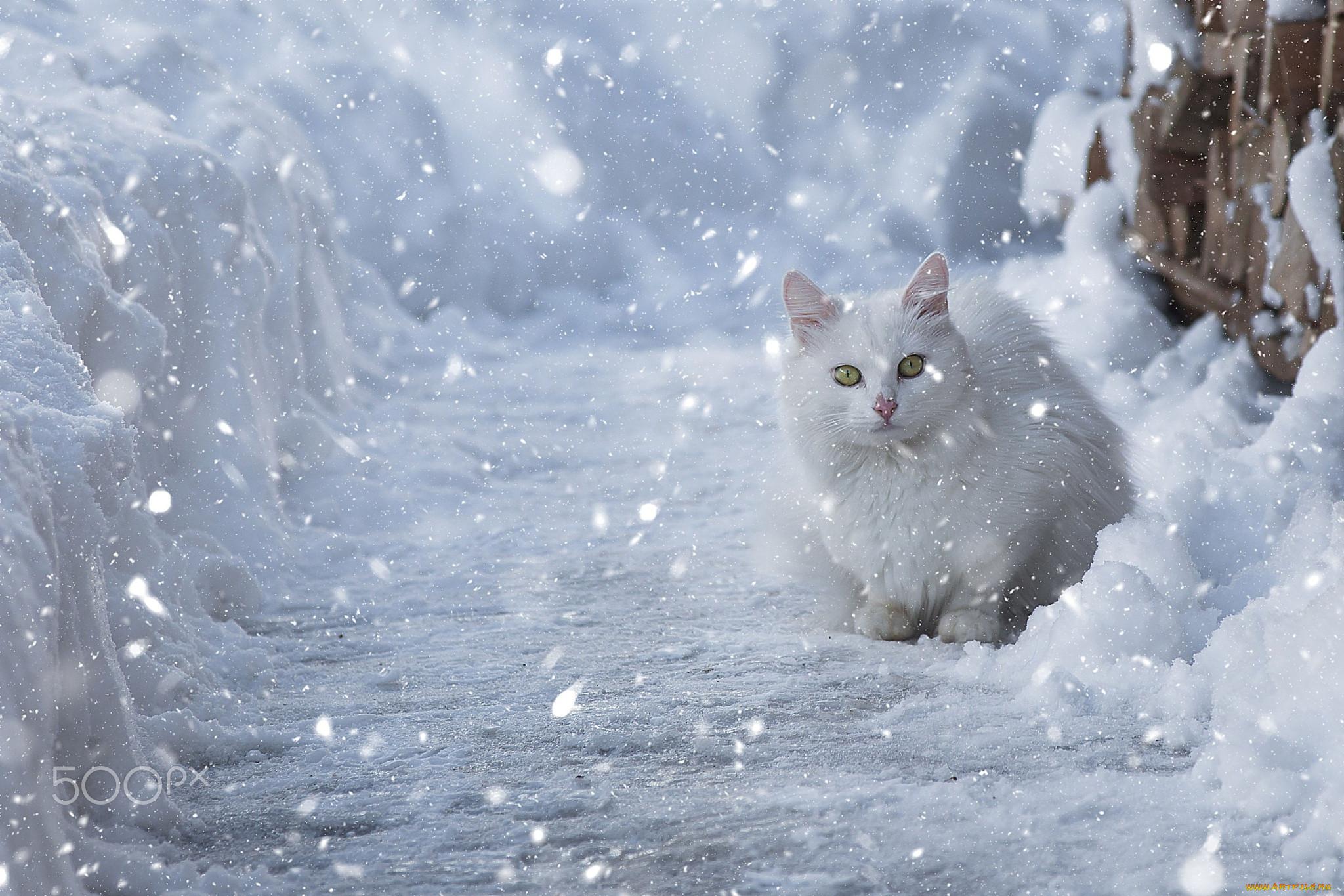 выбору снегопад и животные картинки покупка